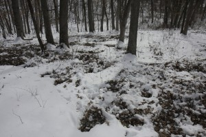 Deer beds in snow. Van Buren county Iowa 355 acre farm for sale.