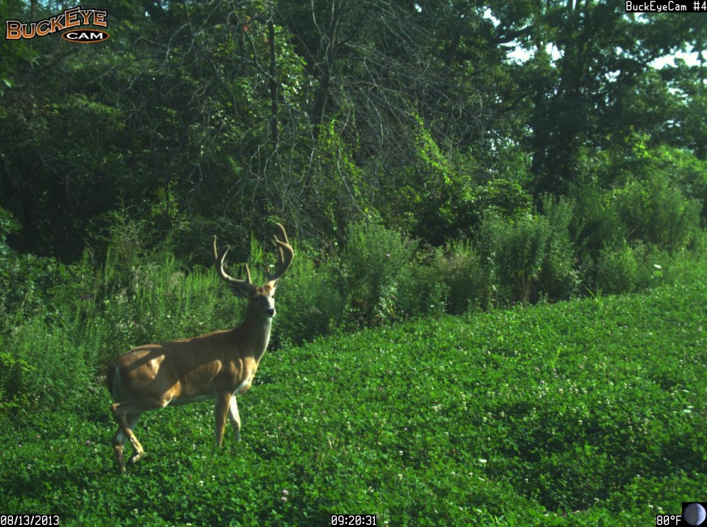 Van Buren county Iowa 355 acre farm -- picture of big buck