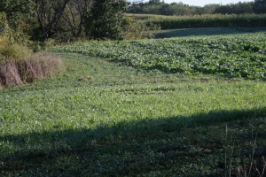 Edge habitat. Food plot areas. Van Buren county, Iowa 355 acres for sale