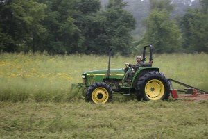 Iowa habitat improvement by mowing down tall field grasses for food plot
