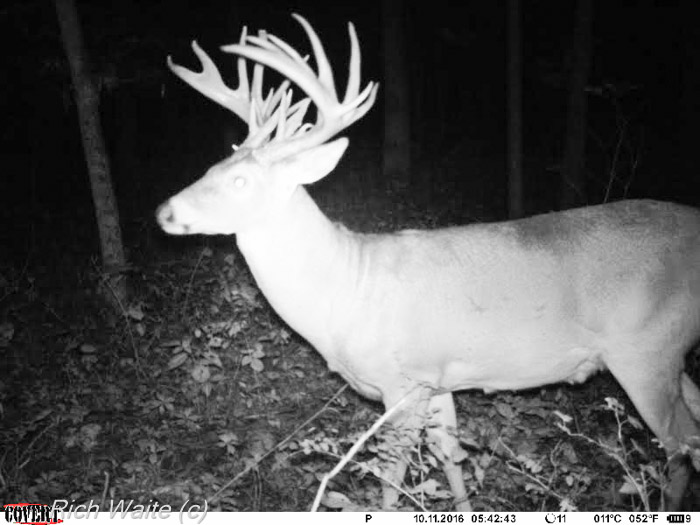 Trail camera image of the Junkyard buck harvested in Iowa.