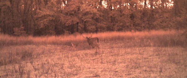 Big buck picture van buren county 355 acre Iowa farm for sale