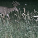 Iowa buck picture