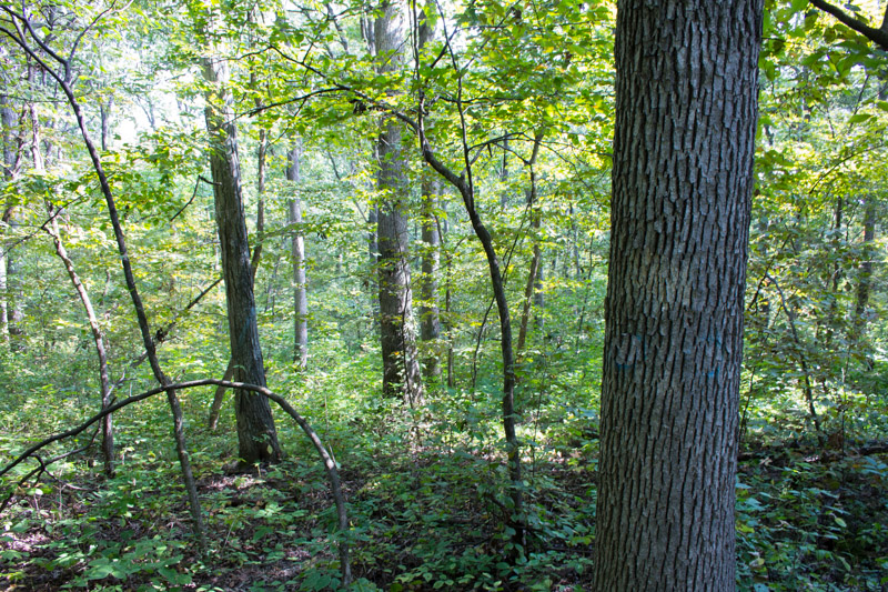 No Real Estate Taxes with Iowa Forest Reserve Program