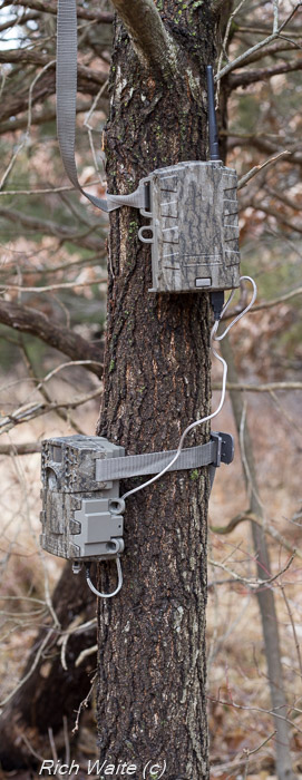 Image of Moultrie Mobile wireless modem and Moultrie 888i Mini game camera on a tree.
