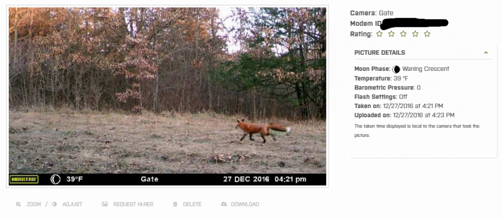 Picture of red fox taken with the aid of the Moultrie wireless modem.