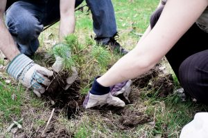 Picture of someone planting a tree. Cost-share money is readily available for this practice in Iowa.